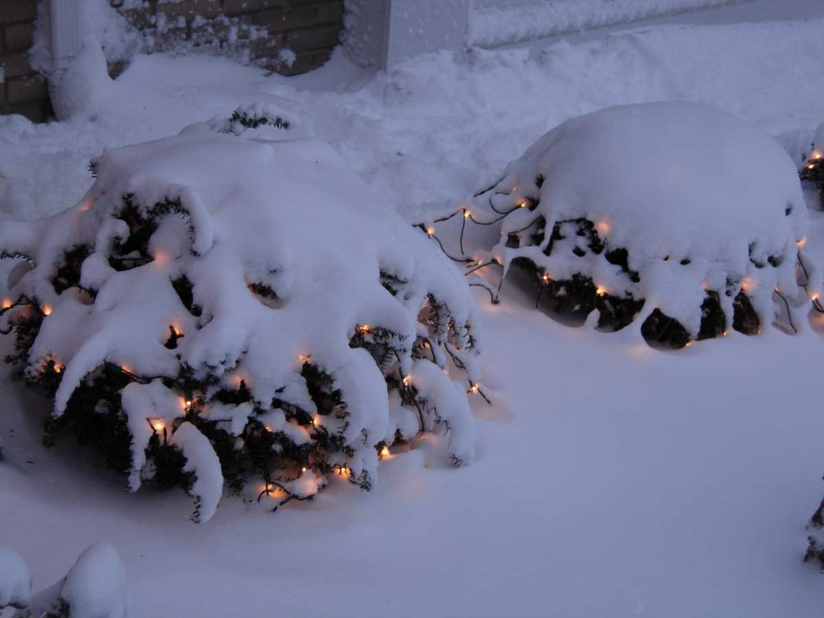 Bushes with lights